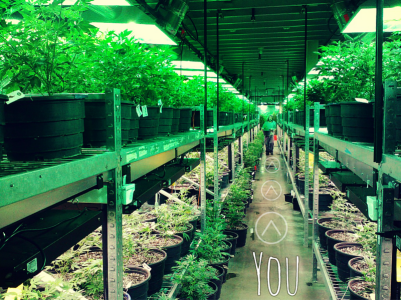 Tending to the Green - Becoming a Budtender! | Leafbuyer