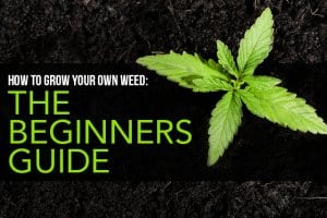 How to Grow Your Own Weed