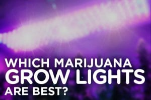 Marijuana Growing Lights
