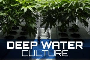 Deep Water Culture Systems