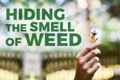 Hiding the Smell of Weed
