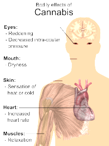 effects of cannabis on the body