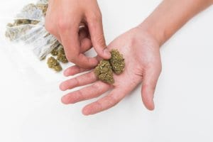 Hands Holding Marijuana Nugs in Public Bag