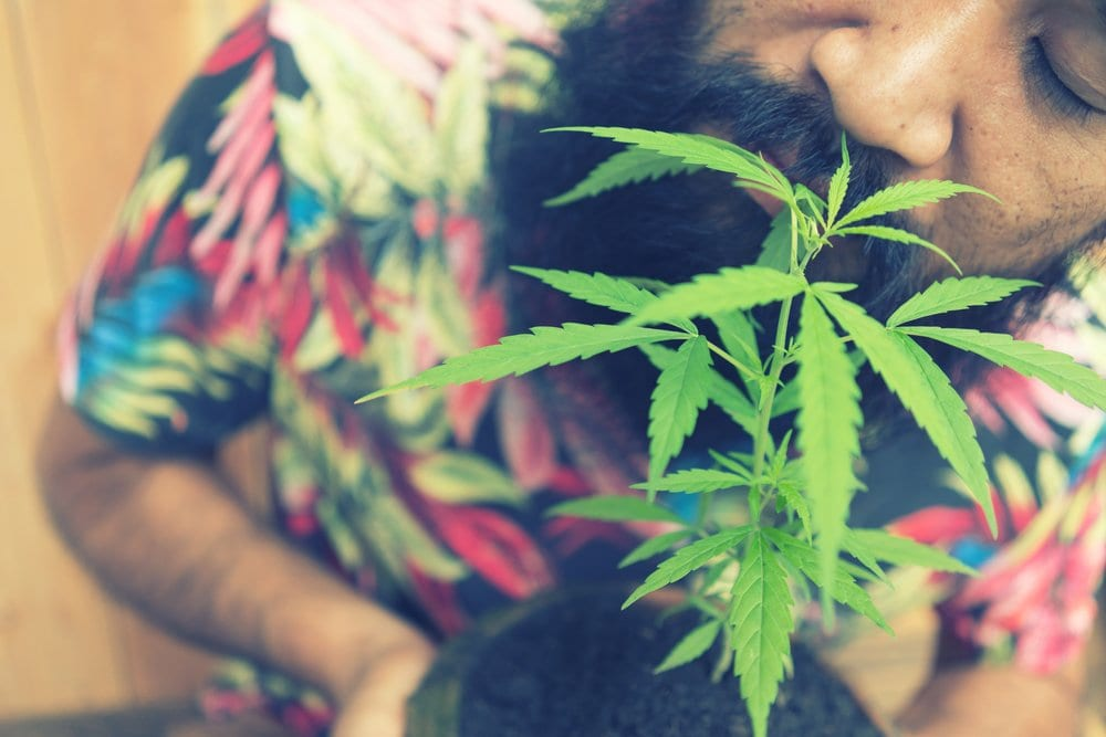 Smiling Man With Cannabis Plant