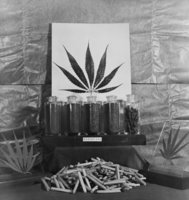 History of Marijuana US Treasury Display