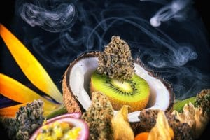 Marijuana Terpenes Bud and Fruit