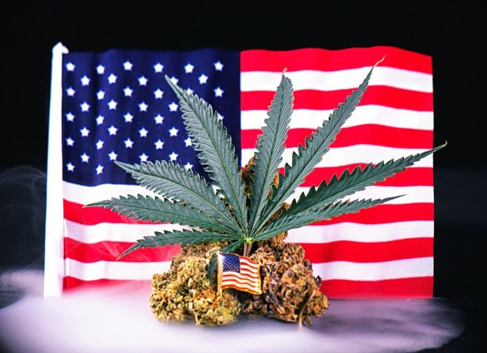 American flag and weed_Roxana Gonzalez