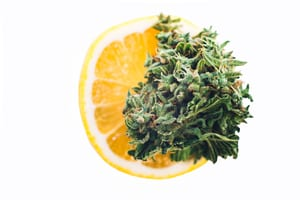 lemon_marijuana_terpenes_By Yarygin