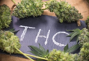 THC may help boost effects between marijuana and Alzheimer's