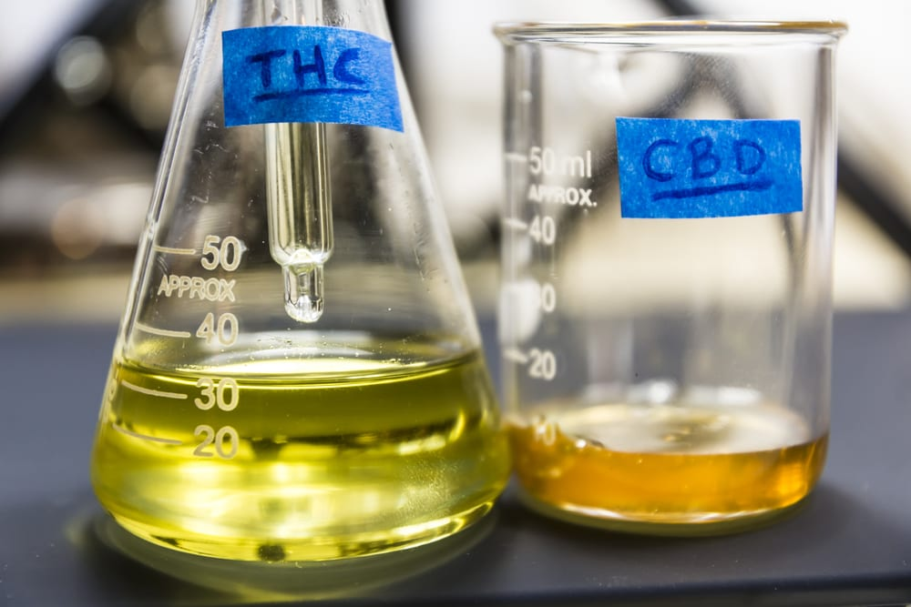 cbd and thc extract in glass beakers to be made into full spectrum cbd