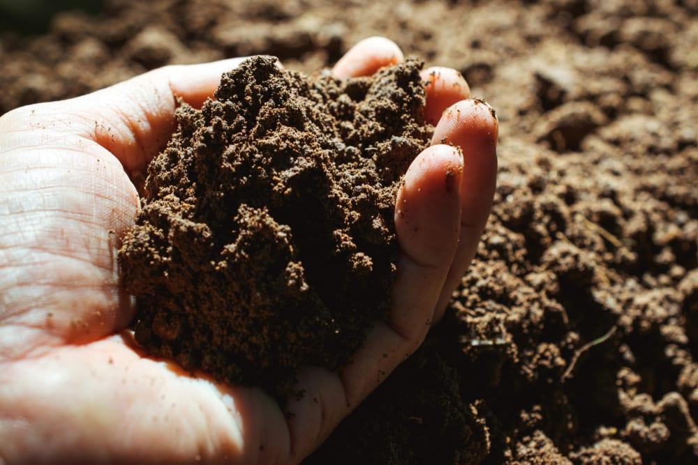 holding healthy soil