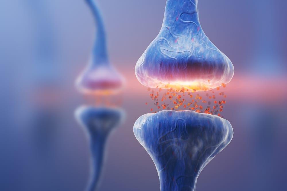 receptors in the endocannabinoid system interacting