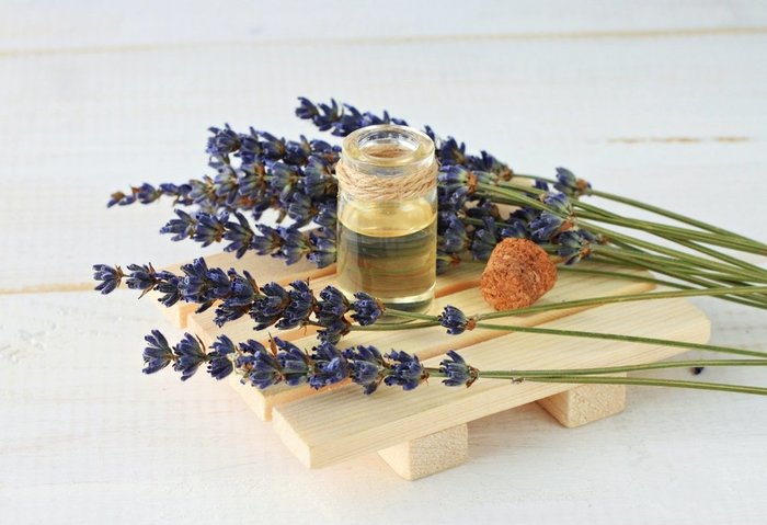 linalool oil and leaves