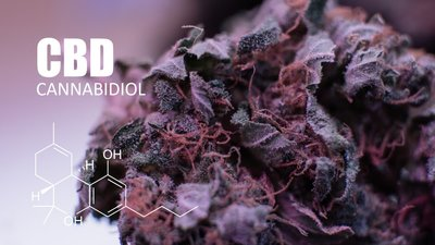 CBD_bud_upclose_By content diller