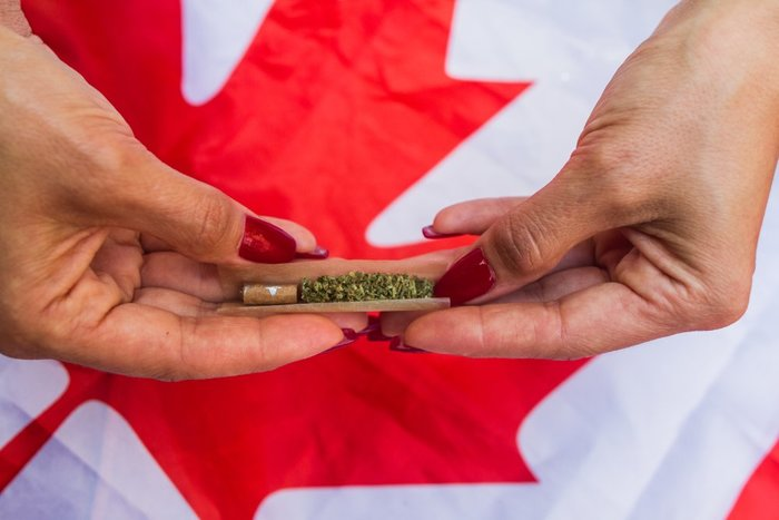 Hands roll joint over Canadian flag - Canadian weed