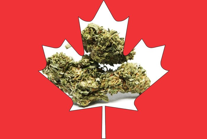 canada marijuana laws are likely to change - weed in a maple leaf
