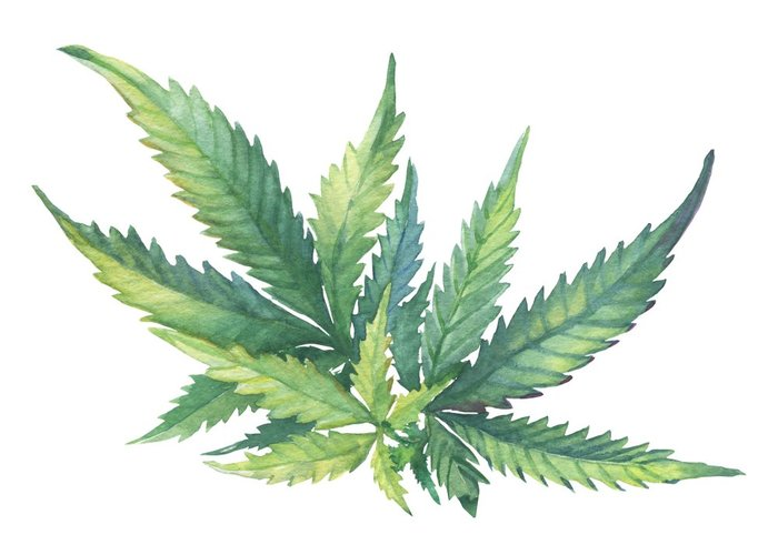 Boost Near Me >> Cannabis in Art: Drawing Inspiration from the Plant | Leafbuyer