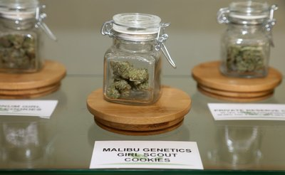 photo of a display case at a marijuana dispensary with three jars of cannabis strains inside, showing what it would be like working in the cannabis industry
