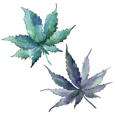 watercolor painting of 2 marijuana leaves on a white background, the leaves are shades of greens, blues, and purples
