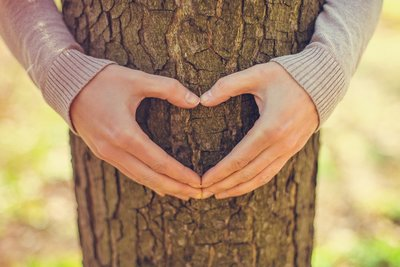 image of a person's arms hugging around a tree with their hands in the shape of a heart