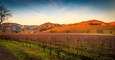 image of napa valley wine country