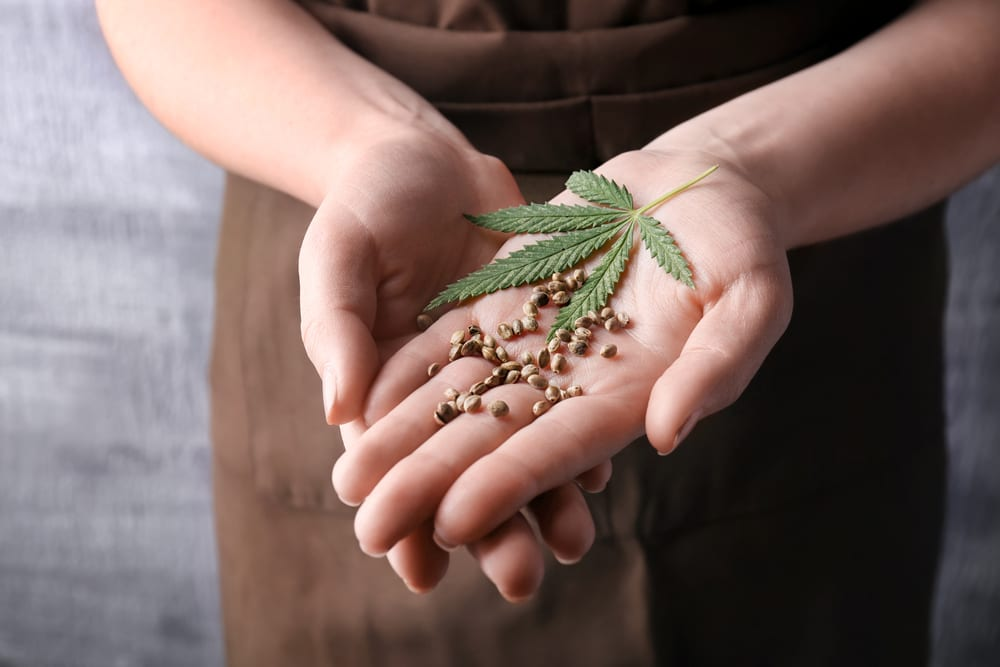 holding cannabis seeds and leaf