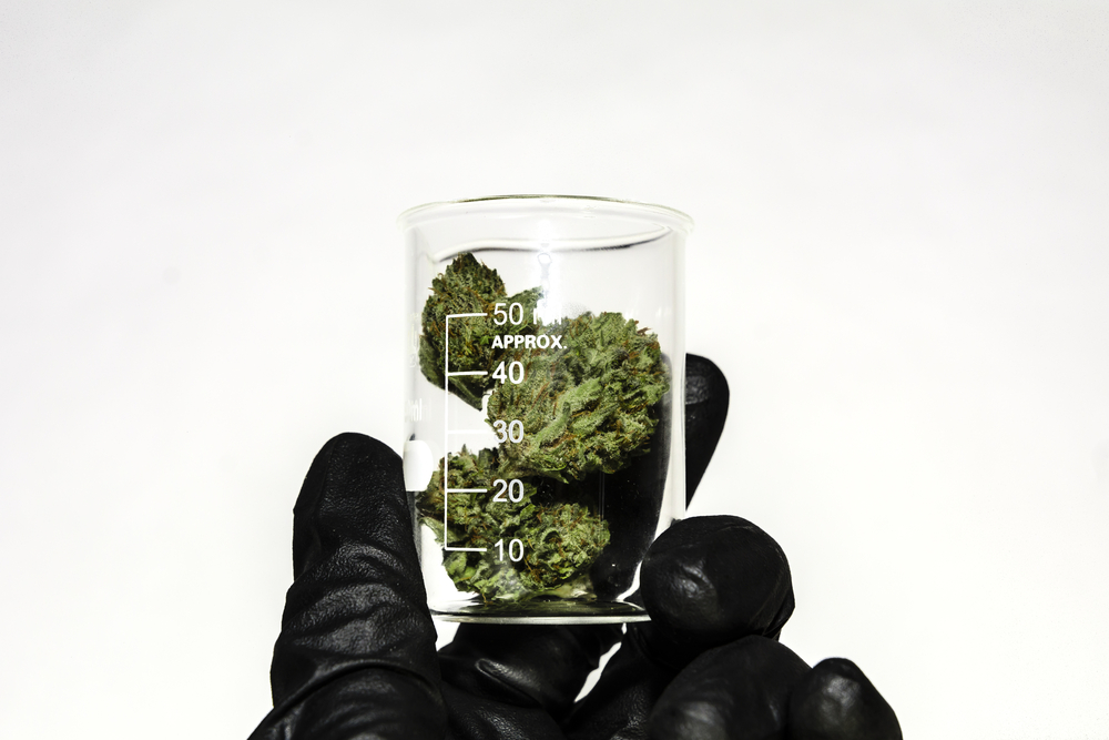 marijuana in a beaker