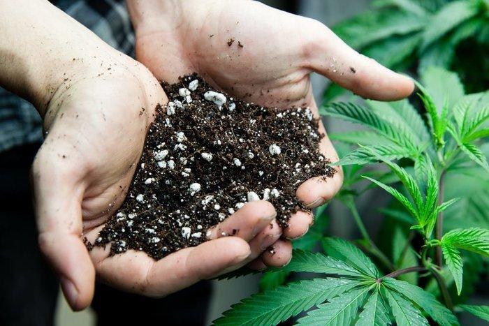 rich soil for hemp, needed for how to grow hemp