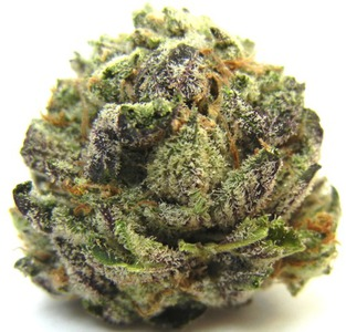 Cataract Kush image