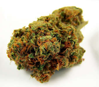 Harlequin (High CBD) image