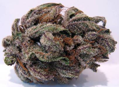 Purple Bubba Kush image