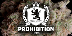 PROHIBITION HERB logo